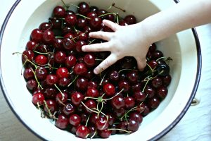 Cherries_Hungary
